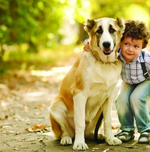 Mammary Cancer in Our Pets