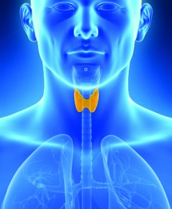 What Does Your Thyroid Do & Why is it Important?