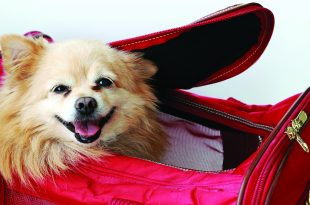Travel Safety for Your Fury Friends