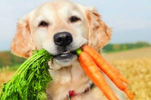 National Nutrition Month, Keep your Pets in Mind Too!