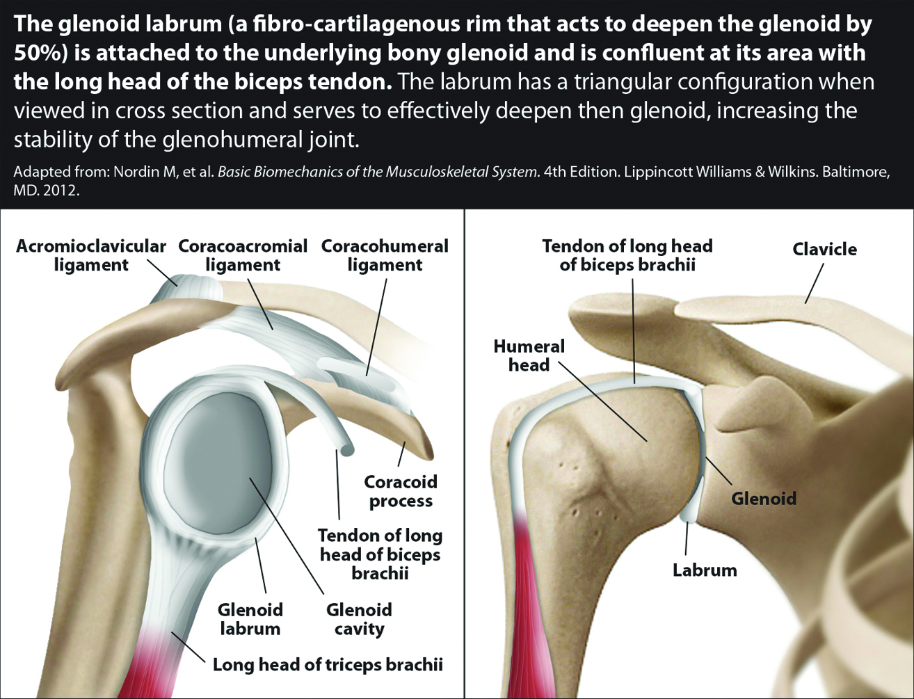 Labral Tears And Rotator Cuff Injuries Regenerative Treatments For