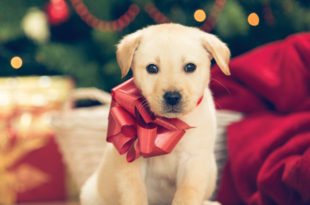 Avoiding Holiday Hazards for Pets