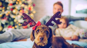 Avoiding Holiday Hazards for Pets