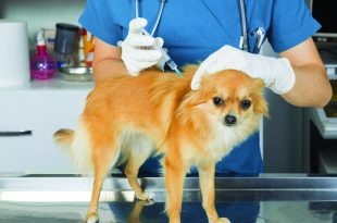 Are We Over Vaccinating Our Canine and Feline Companions?