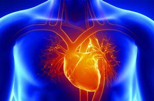 Toxic Heavy Metals & Cardiovascular Disease
