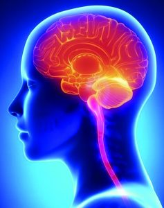 Staving off Neurodegenerative Disease with the Right Diet and Supplements