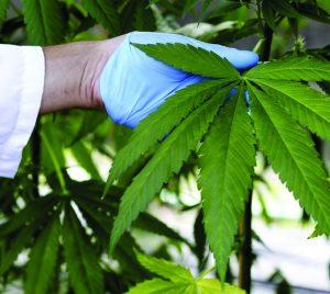 Medical Marijuana is Proving to  be a Leading Treatment Alternative