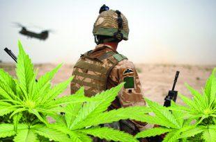 Medical Marijuana for PTSD