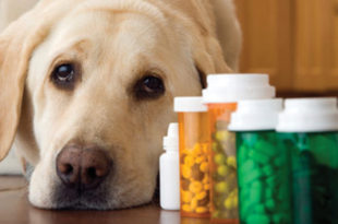 Veterinary Compounding for Hard to Medicate Pets