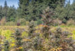 Plants Before Pills: CBD From 'For Hemp Sake' is Getting Rave Reviews