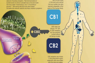Pain Management and CBD Water