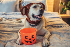 Halloween Candy & Other Toxic Foods to Keep Away From Your Pets