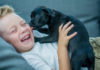 Did You Recently Get A New Pet? 6 Things You Need to Know
