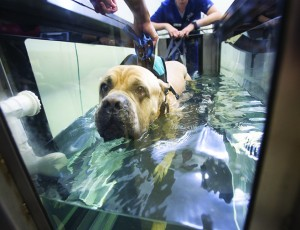 our Four-Legged Best Friend Benefits From Physical Rehabilitation