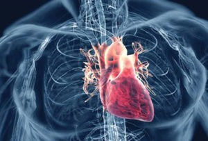 Knowing the Signs and  Symptoms of Heart Disease